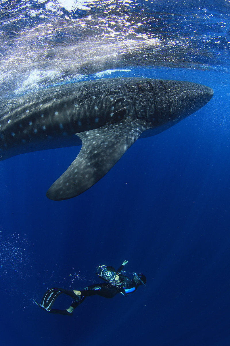 Sol Tamargo swimming with whale sharks cofounder of del sol photography