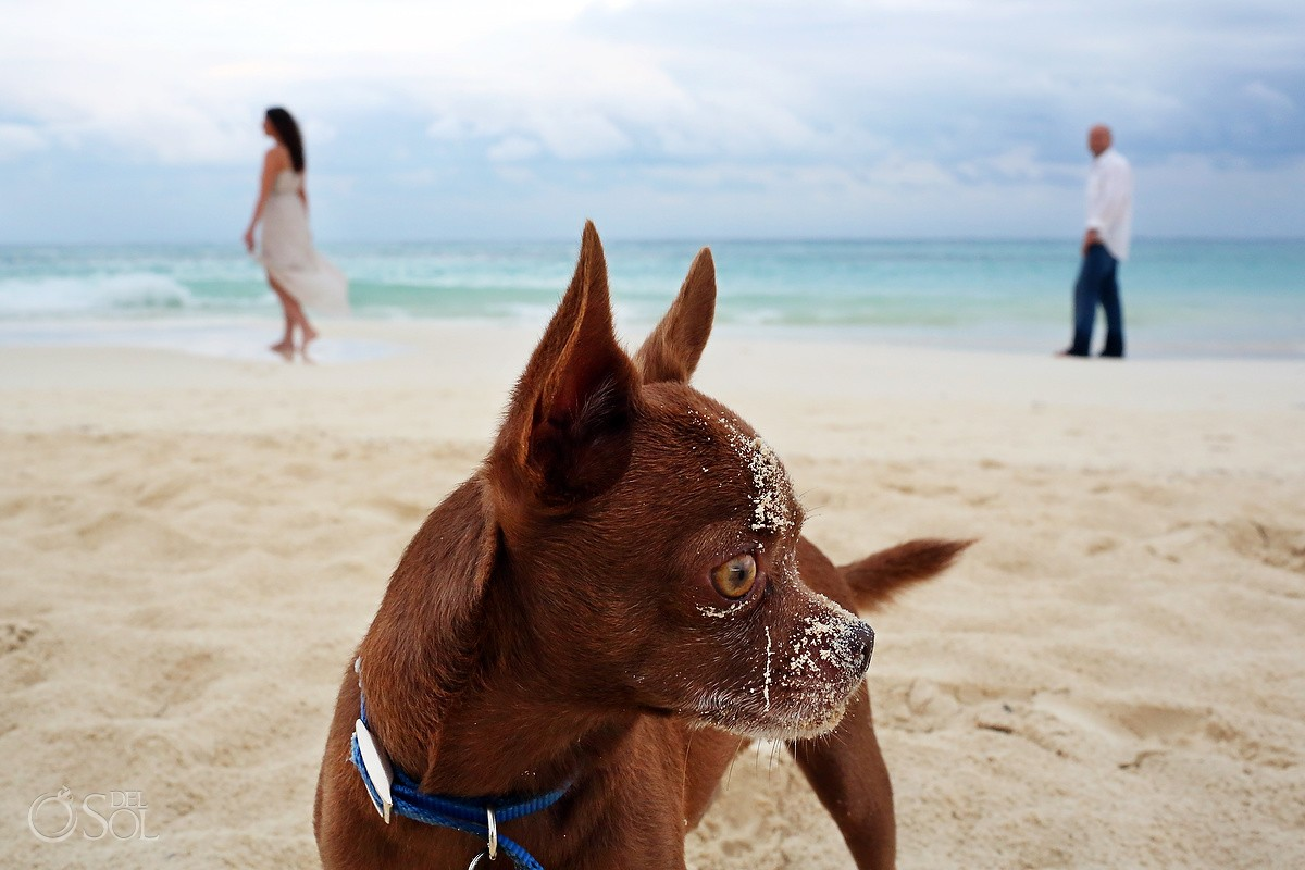 dog on the beach in playa del carmen mexico