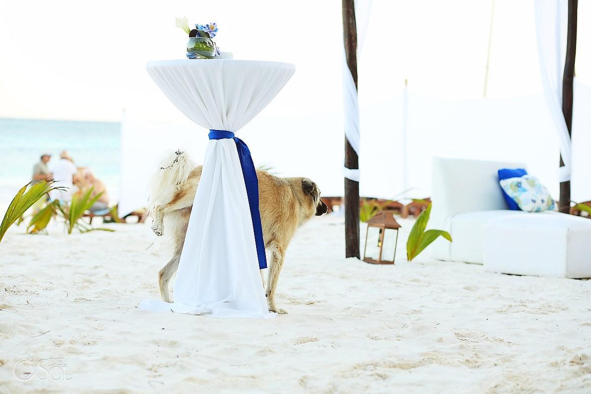 Beach wedding dog peeing