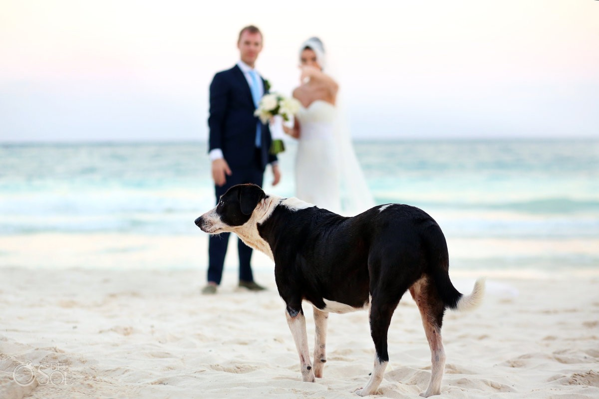 bride-groom-dog-beach