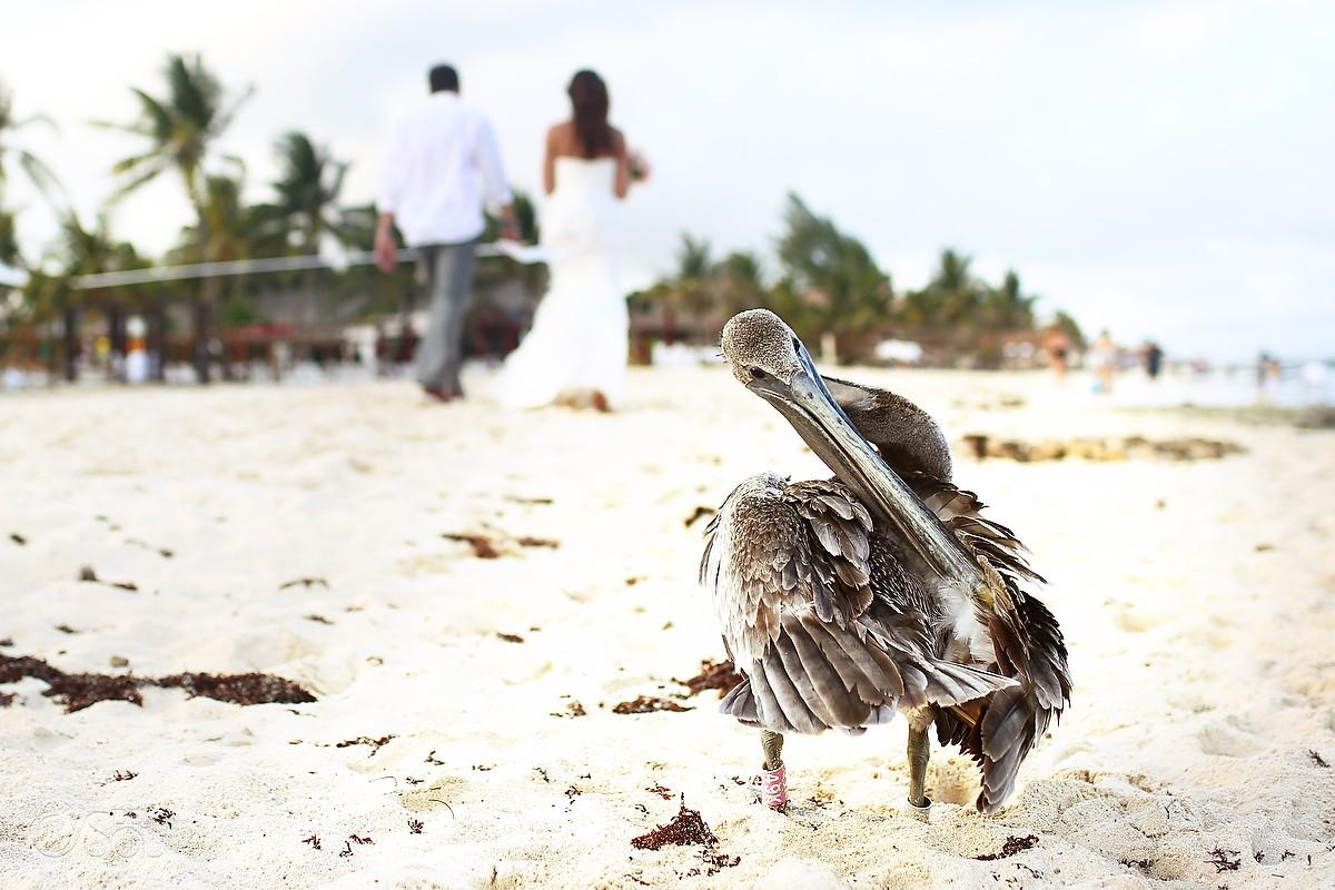 Beach wedding Le Reve Riviera Maya