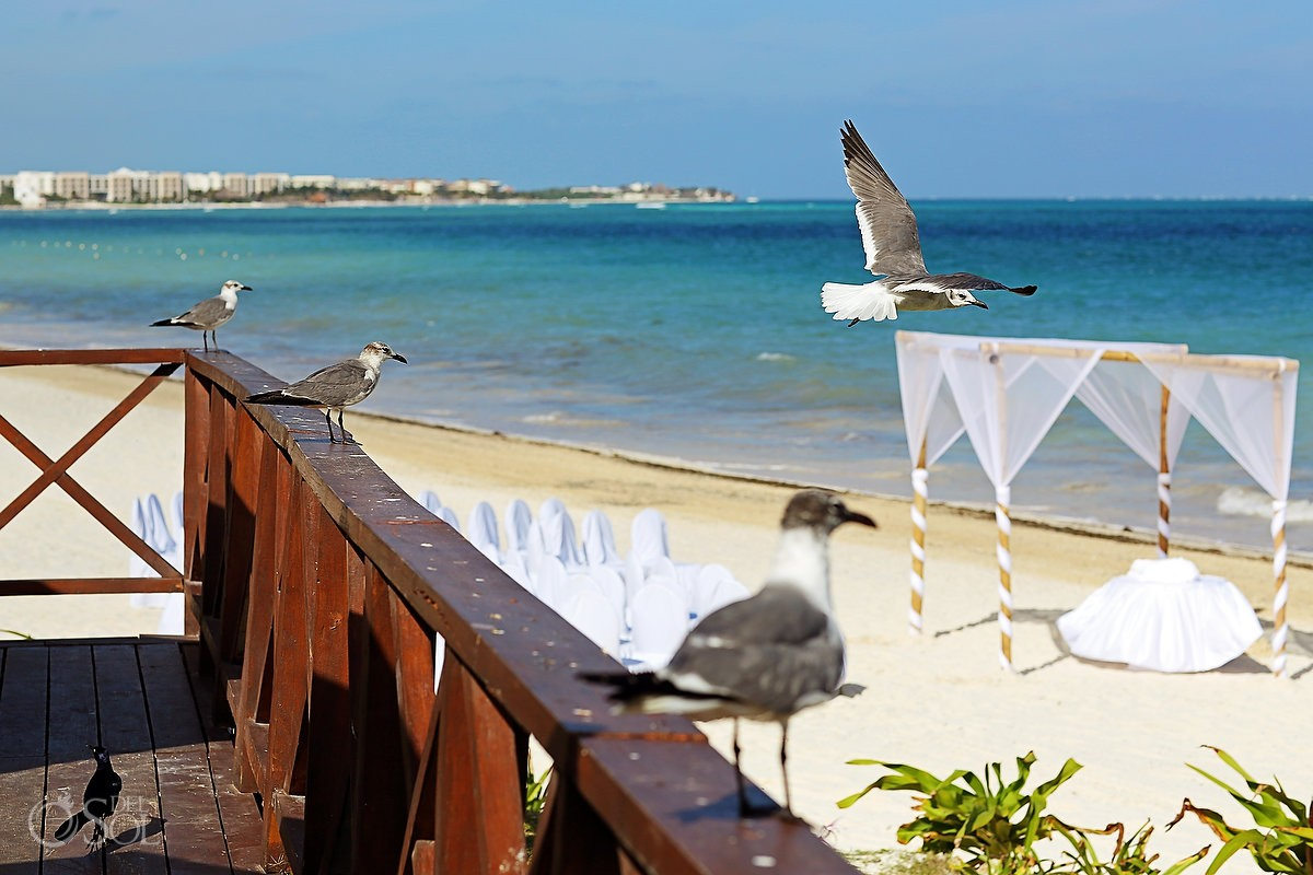 Bird flying beach Puerto Morelos Caribbean Sea