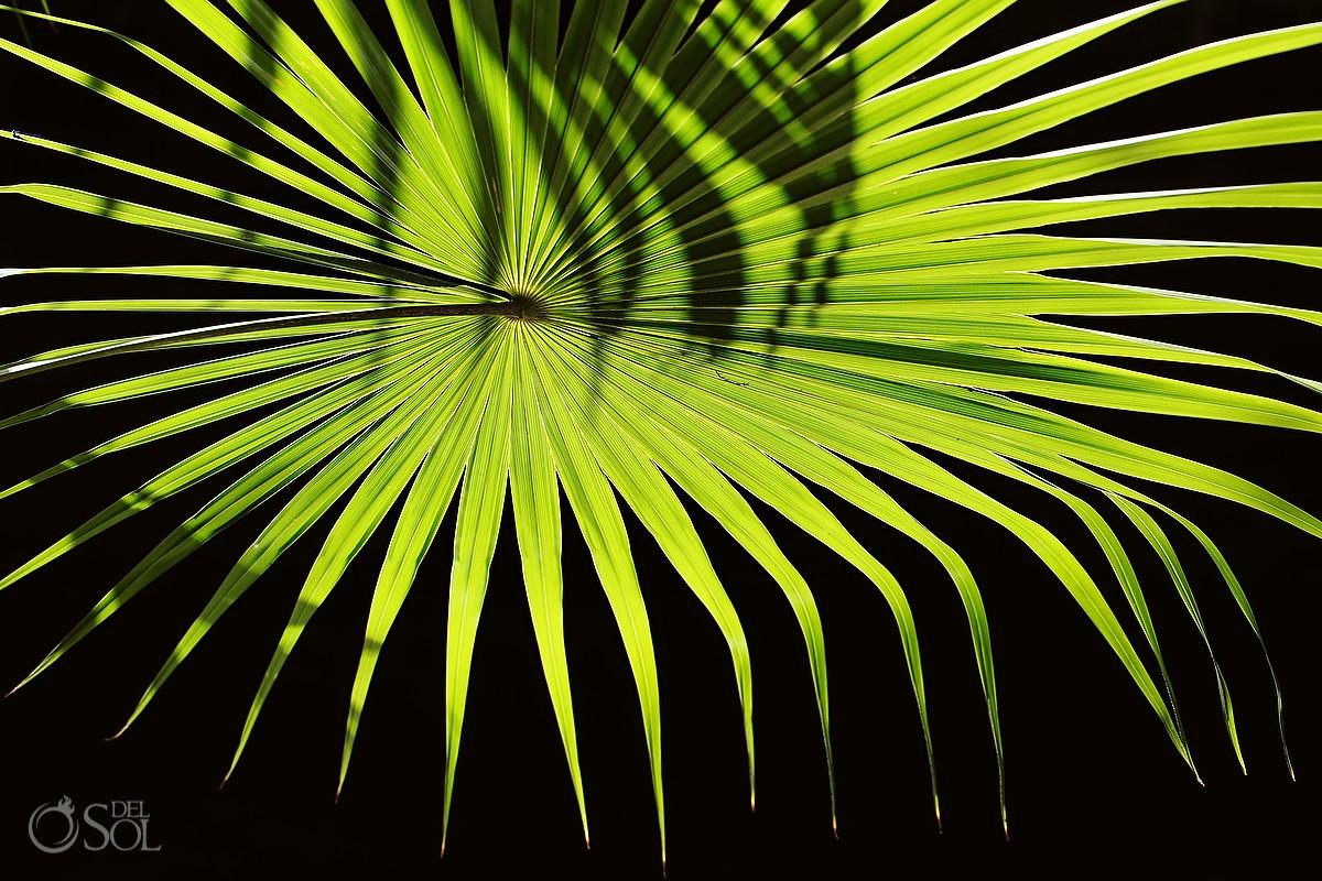 Palm frond in the Riviera Maya jungle Riviera Maya photography