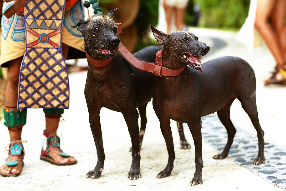 Aztec dogs xolosquincle