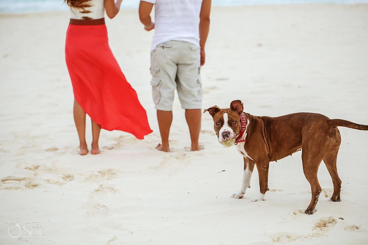 beach dog at photo shoot riviera Maya