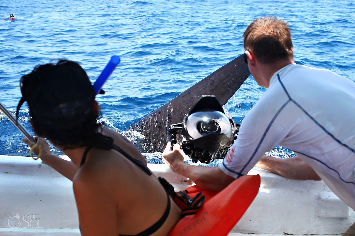 Swimming with whale sharks Yucatan