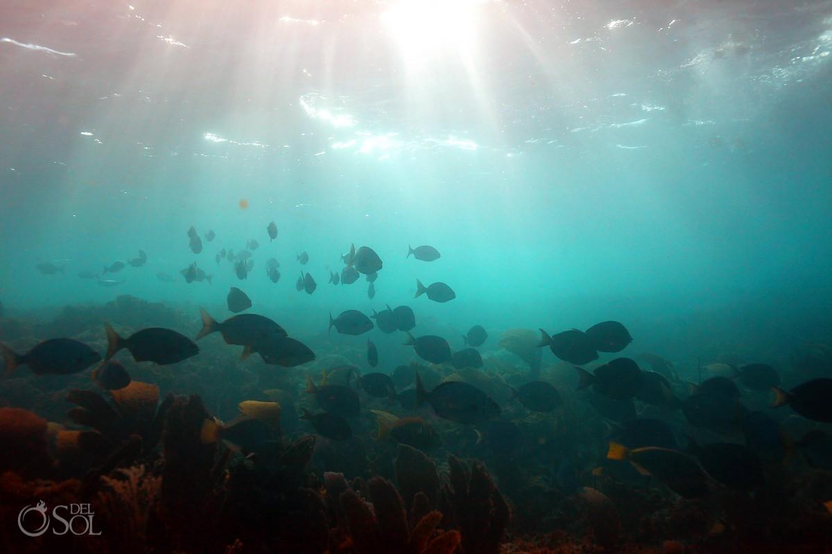 Photo underwater fish Isla Mujeres snorkel