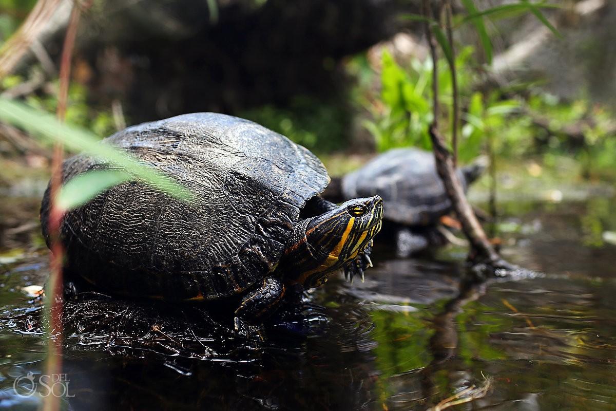 Riviera Maya photography cenote trash the dress turtle