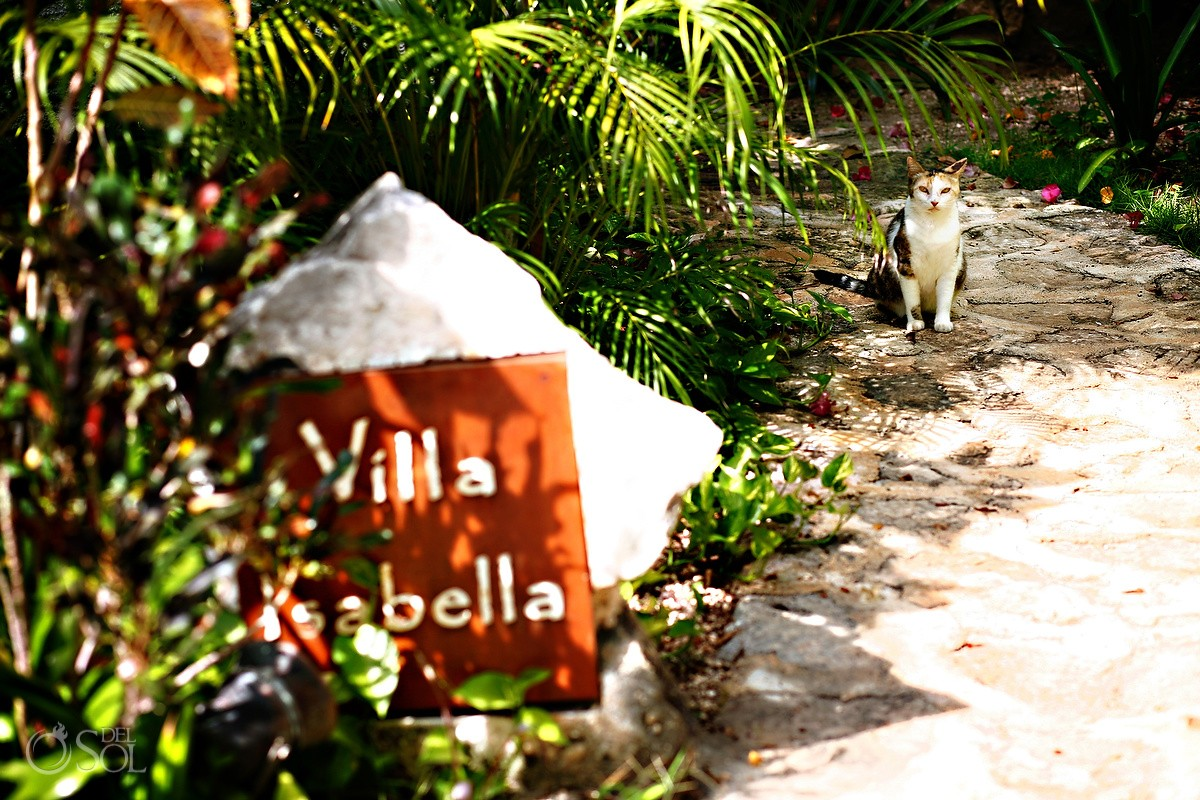 Villa Bella and cat outside of Belmond Maroma Resort
