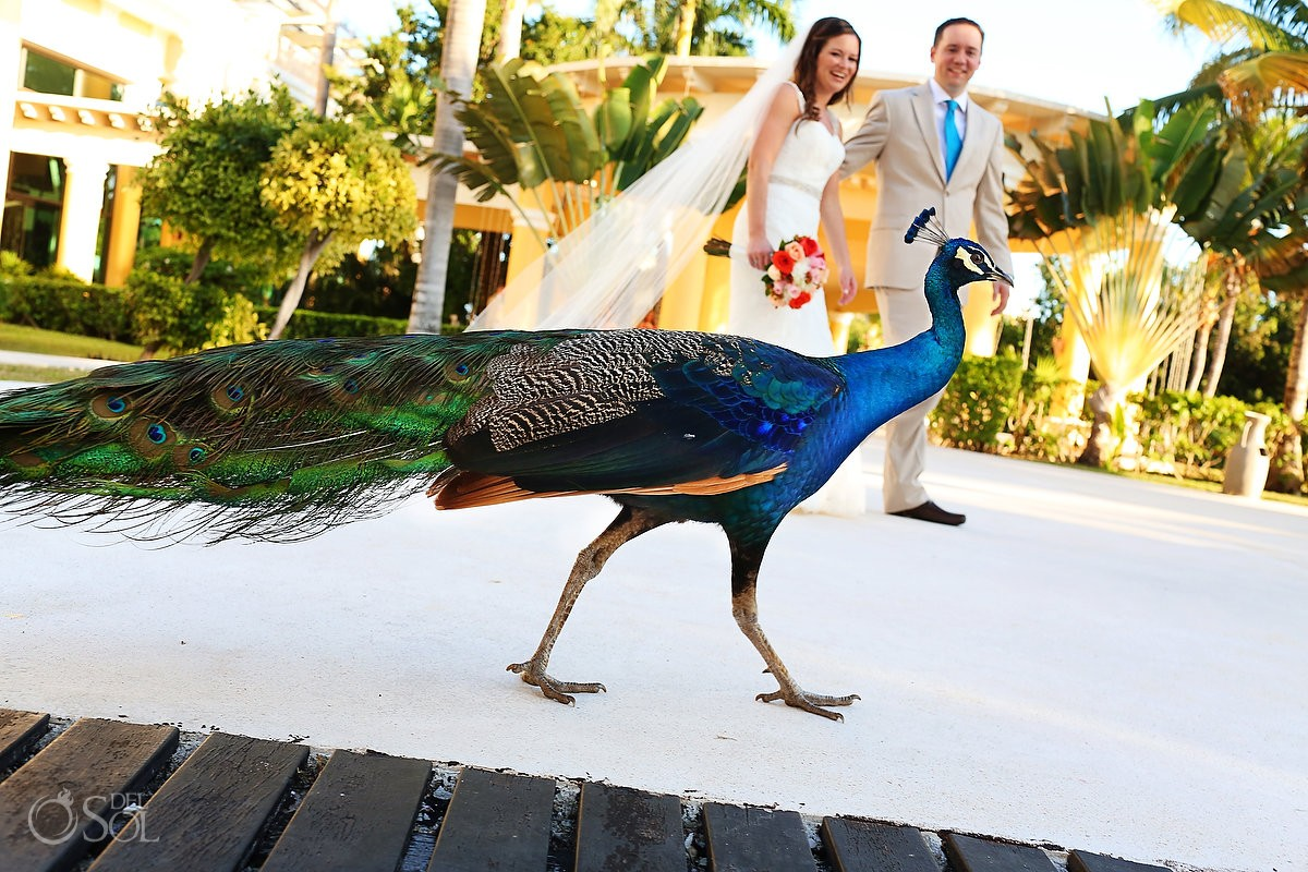 Wedding Iberostar Pea Bride Groom Riviera Maya