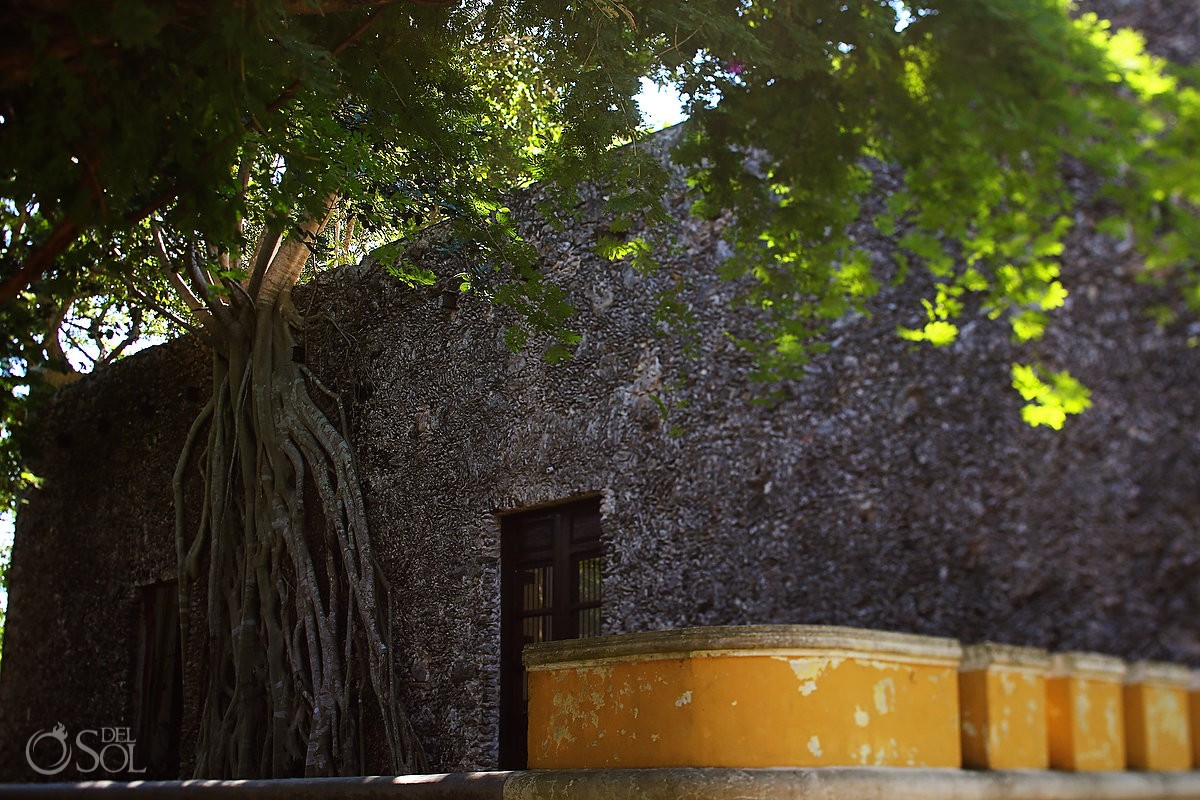one of the many amazing walls with trees growing Chable Resort, Colonial boutique hotel