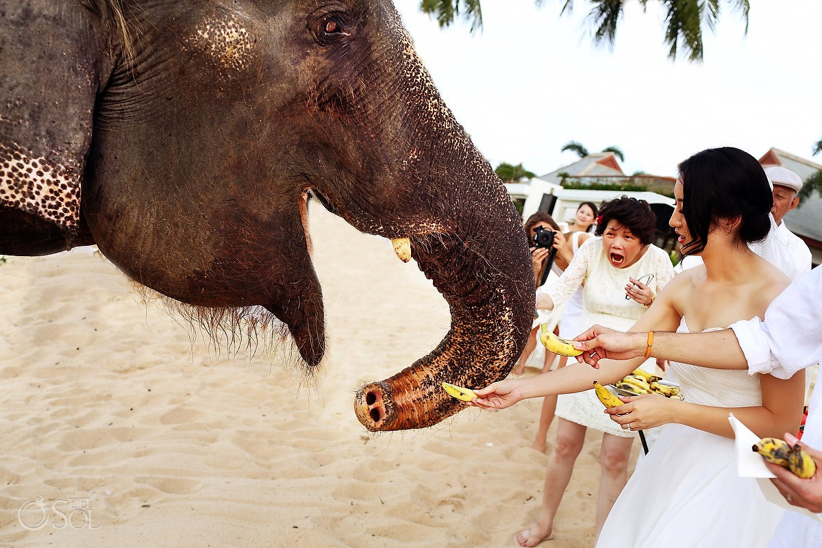 Mother of the groom has a fun reaction to elephant eating out of hands of bride
