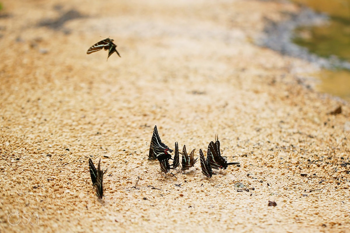 butterflies line the path on the way to the sacred ceiba tree