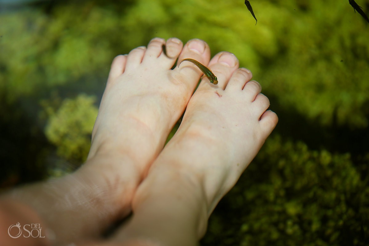 small fish swimming over the feet of children in cenotes in mexico