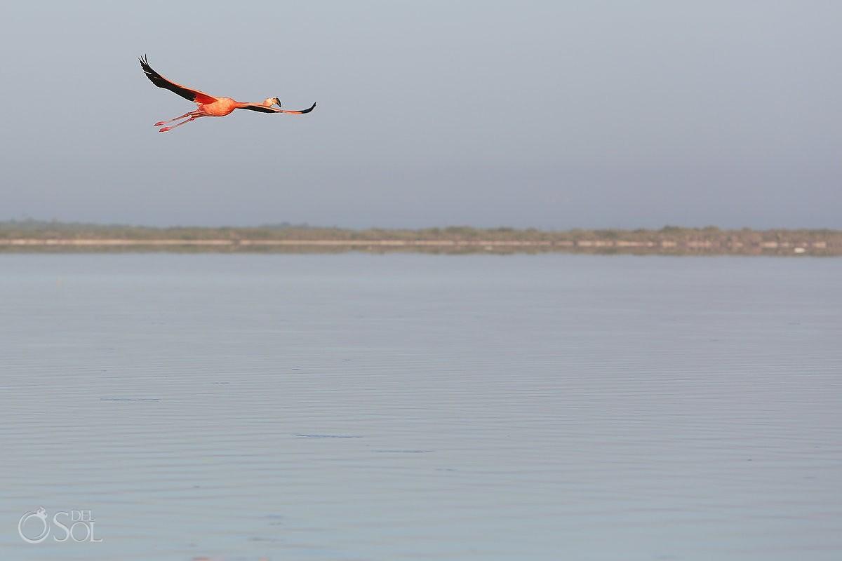 Pink Flamingo Rio Lagartos #ExperienciasInfinitas del Sol Photography