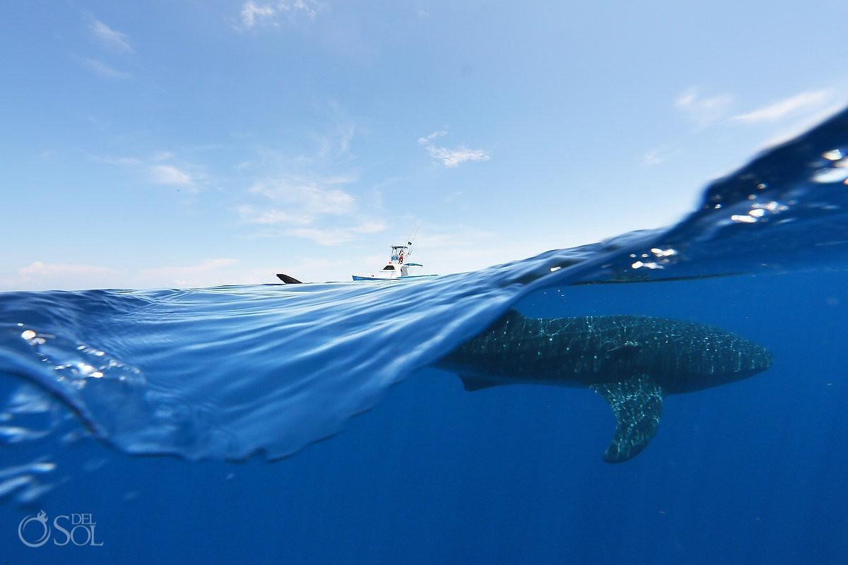 whale shark photography workshop ISla M #Aworldofititsown Matt Adcock from Del Sol Photography