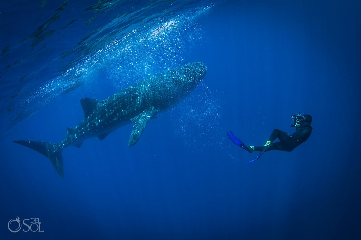 Isla Mujeres Whale Shark photos by Del Sol Photography