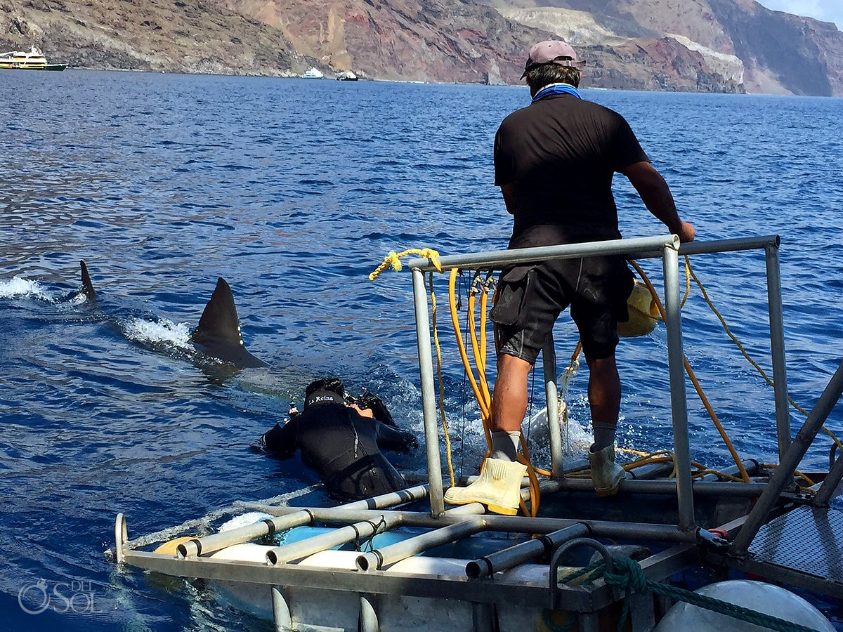 Photographer surface Great white shark cage dive, Guadalupe Island, Mexico.