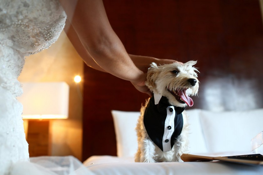 Cute dog tuxedo groomsmen outfit, funny animal wedding picture