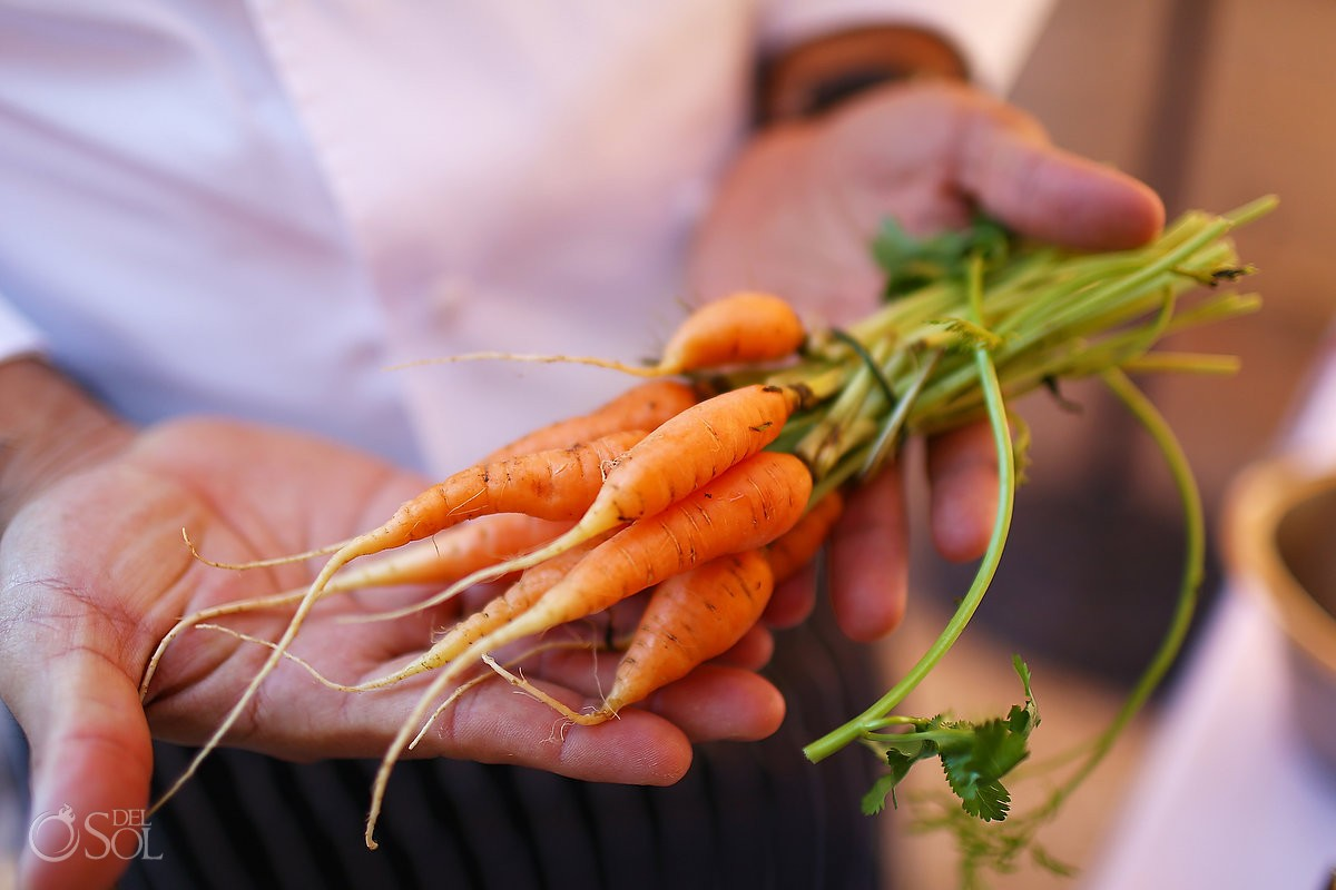 organic carrots cooking lesson Rosewood Hotel San Miguel de Allende