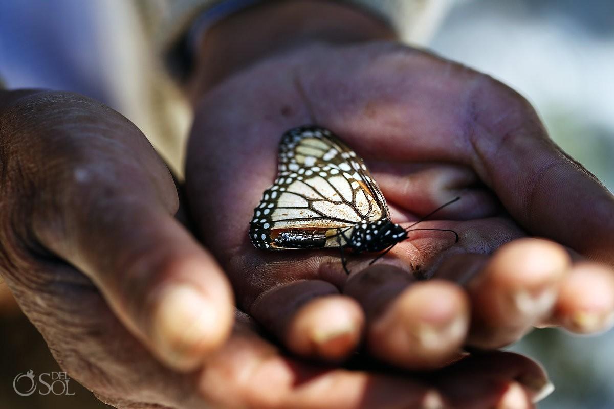 monarch butterfly held in hands