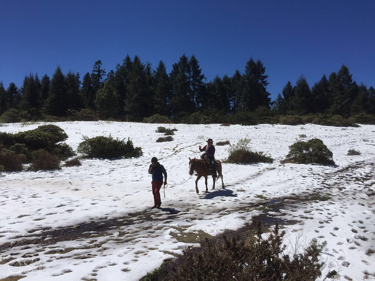 horse rided led over snowy fields, Travel photography Michoacan
