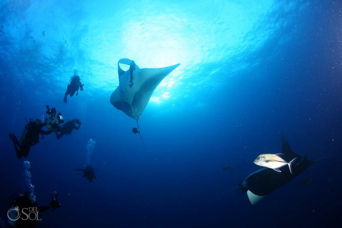 giant mantas divers cameras photographers, Diving live-aboard Socorro Revillagigedo Islands