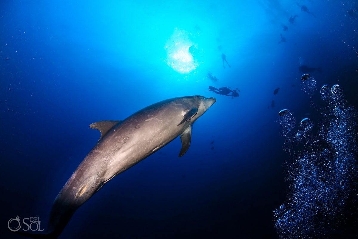 dolphin diver silhouettes Diving live-aboard Socorro Revillagigedo Islands
