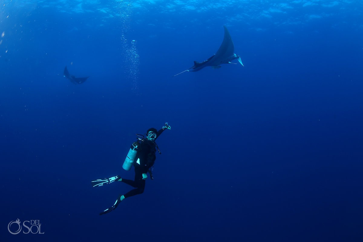 diver and giant mantas Diving live-aboard Socorro Revillagigedo Islands