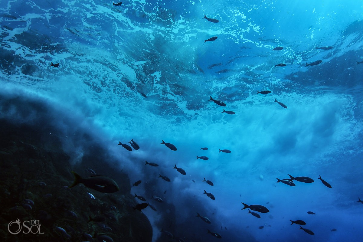 fish silhouettes under rough waves water surface Diving live-aboard Socorro Revillagigedo Islands