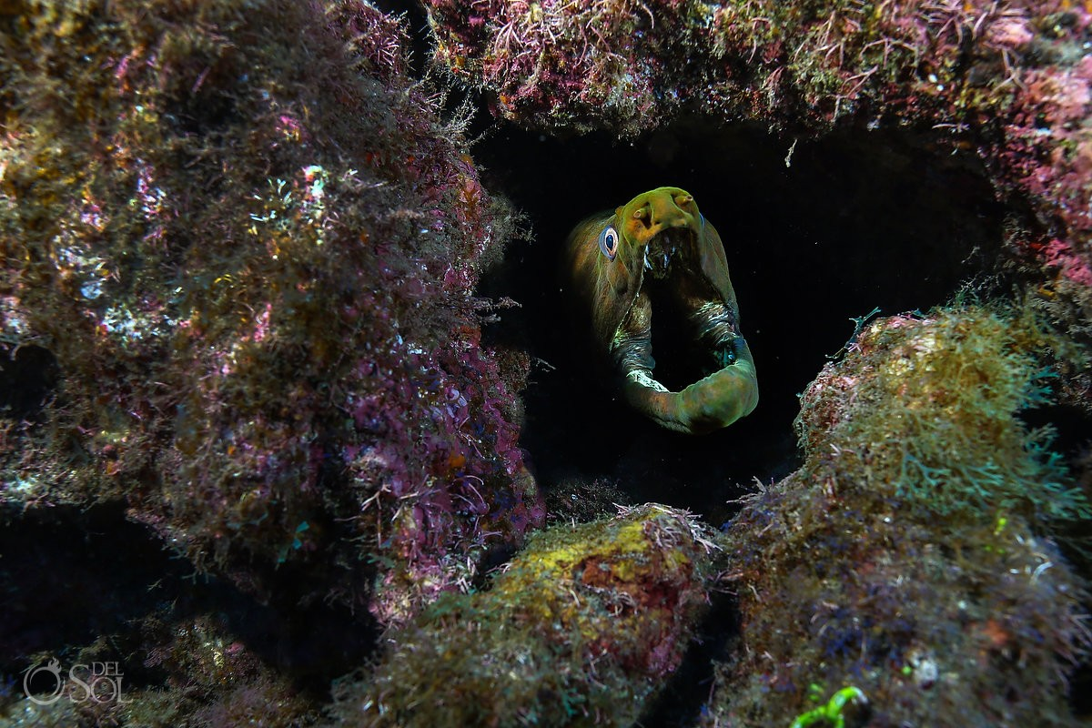 freen moray head gaping Diving live-aboard Socorro Revillagigedo Islands