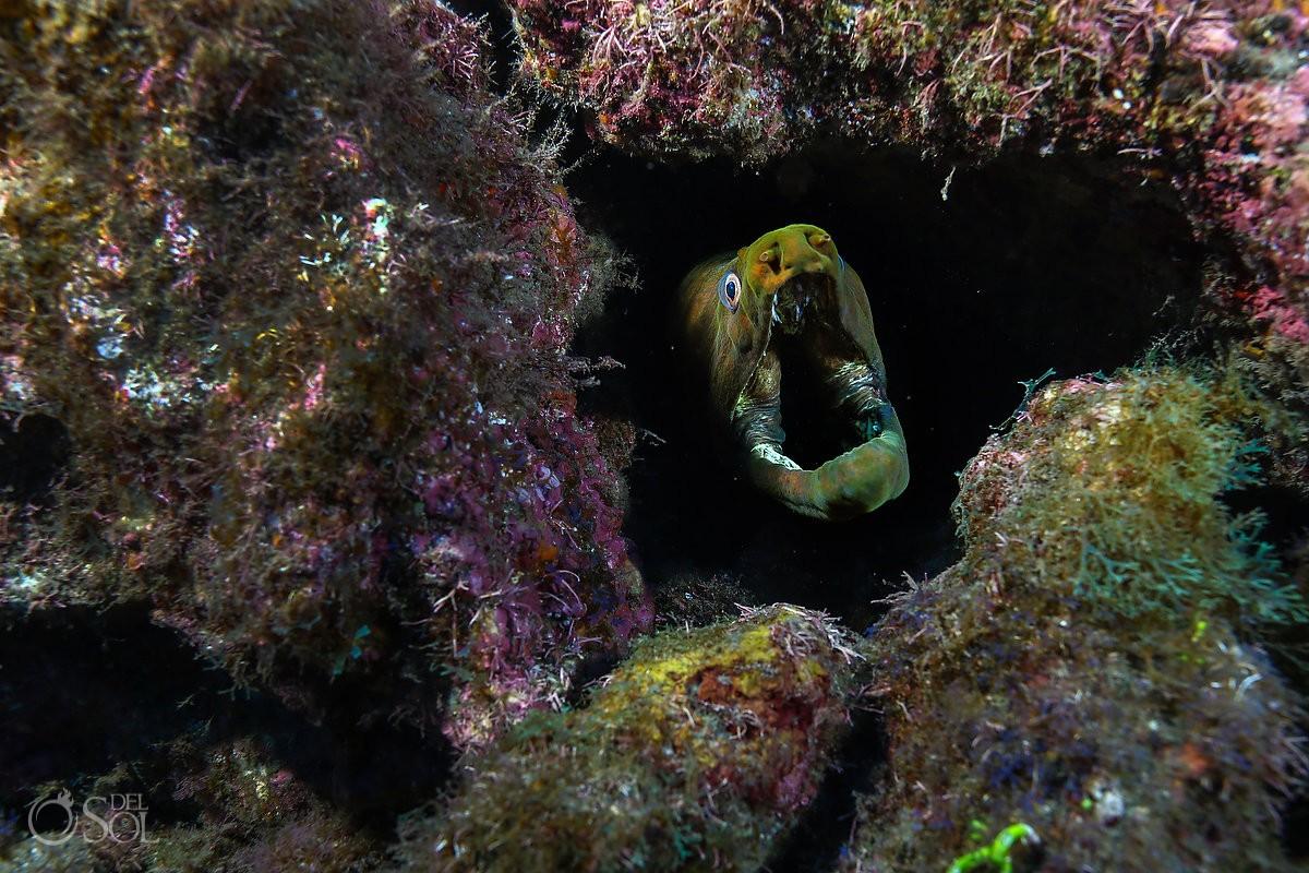 freen moray head gaping Diving live-aboard Socorro Revillagigedo Islands