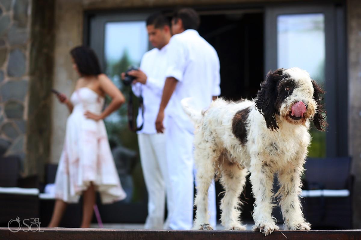 funny wedding photobomb dog Destination Wedding Casa Maya Kaan, Sian Ka'an, Tulum, Mexico