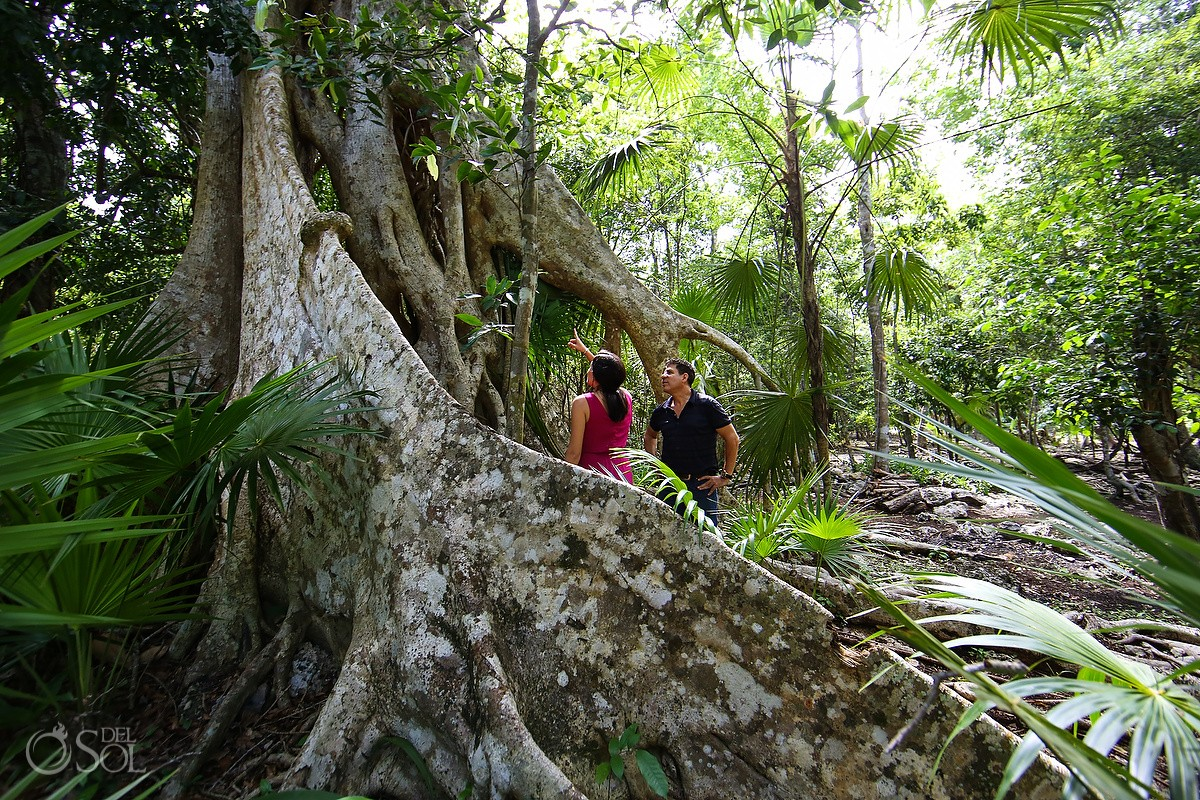 cenote photo adventure giant tree roots Jungle Riviera Maya Mexico
