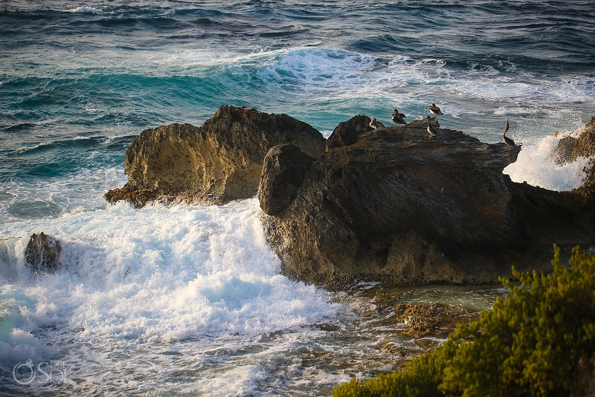 birds on rocks at punta sur isla Mujeres, Cancun, Mexico.