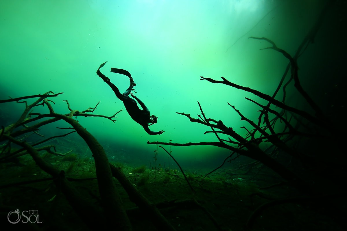 algae bloom cenote free diving tulum mexico