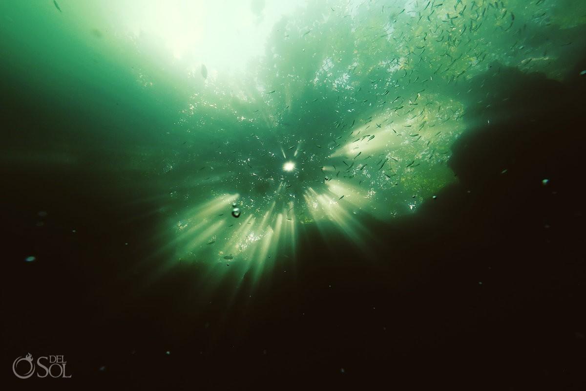 green cenote water tulum mexico