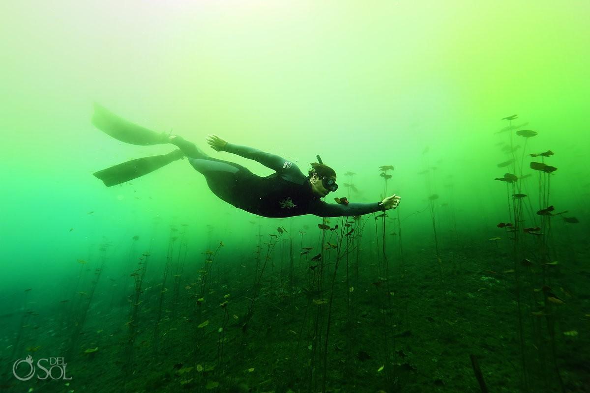 algae bloom cenote free diver tulum mexico