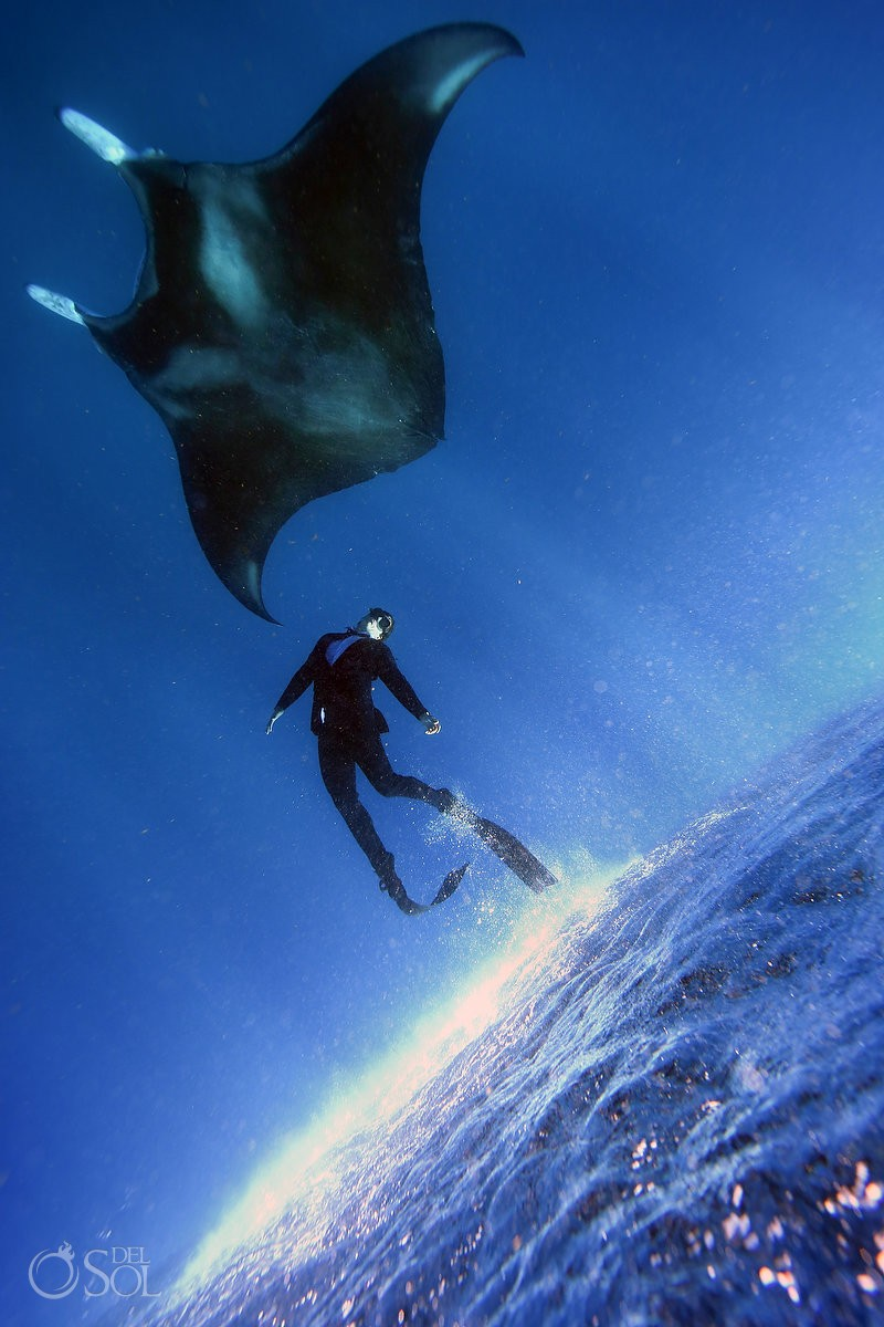 freediver wearing true wet suit by Oceaner chasing manta ray