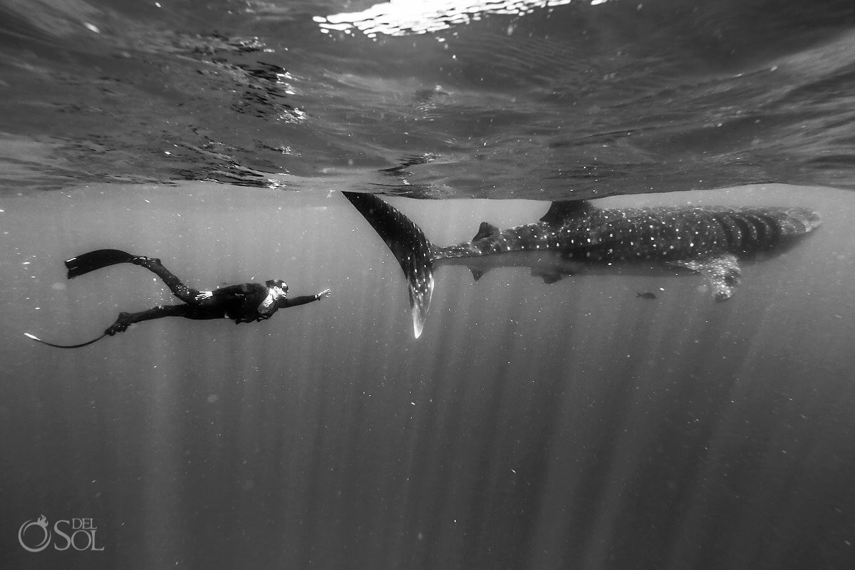 freediver wearing true wet suit by Oceaner whaleshark isla mujeres mexico