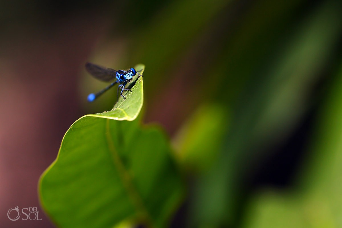 Amazing blue dragonfly cenote trash the dress Riviera Maya Mexico