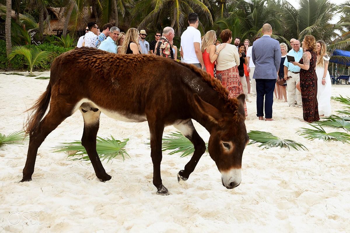 Wedding beach ceremony Donkey photobomb Cabañas La Luna Tulum Mexico