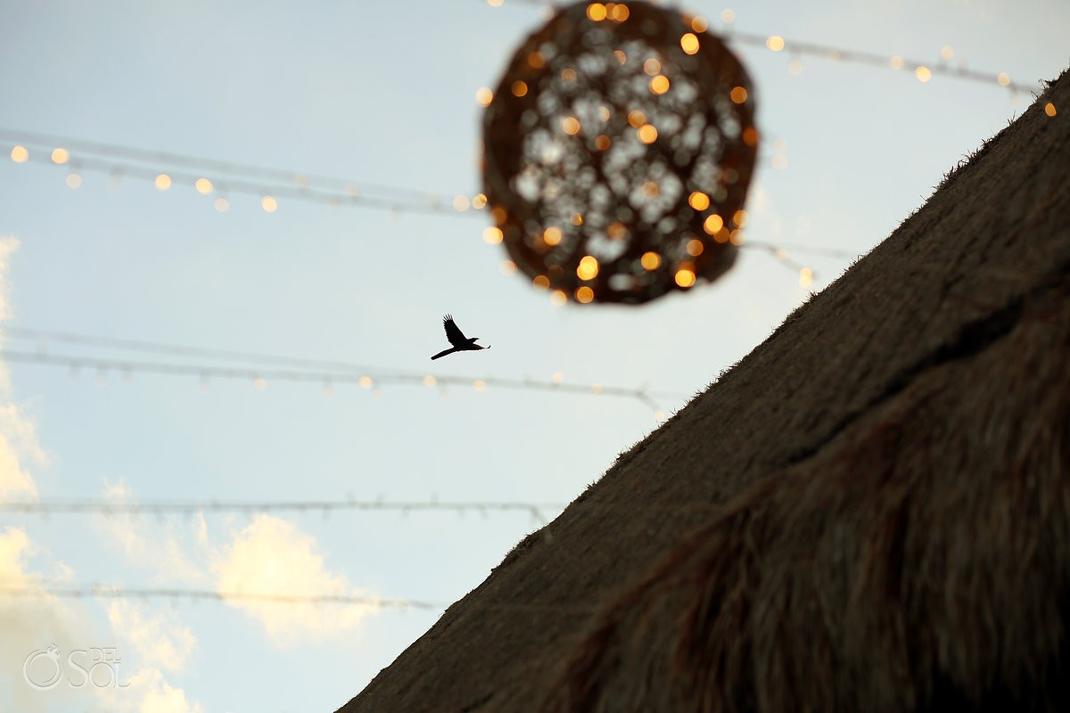 bird flying wedding reception Now Sapphire Riviera Maya México