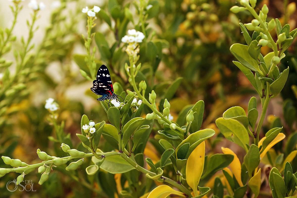 Natural world with butterflies at Nirvana Blue Yucatan