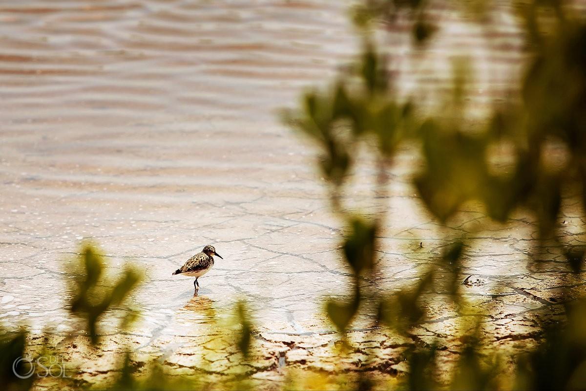 birds in Rio Lagartos Yucatan