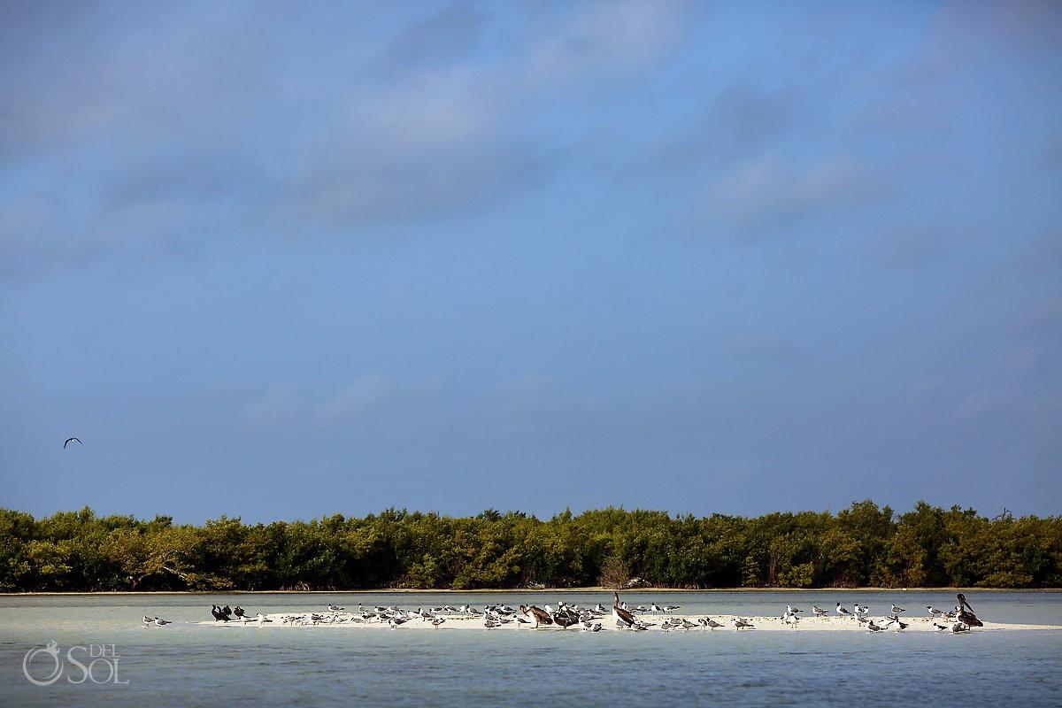 Sea birds in Rio Lagartos Yucatan