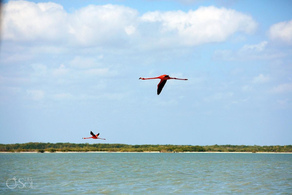 Pink Flamingos in Rio Lagartos Nirvana Blue Yucatan Mexico