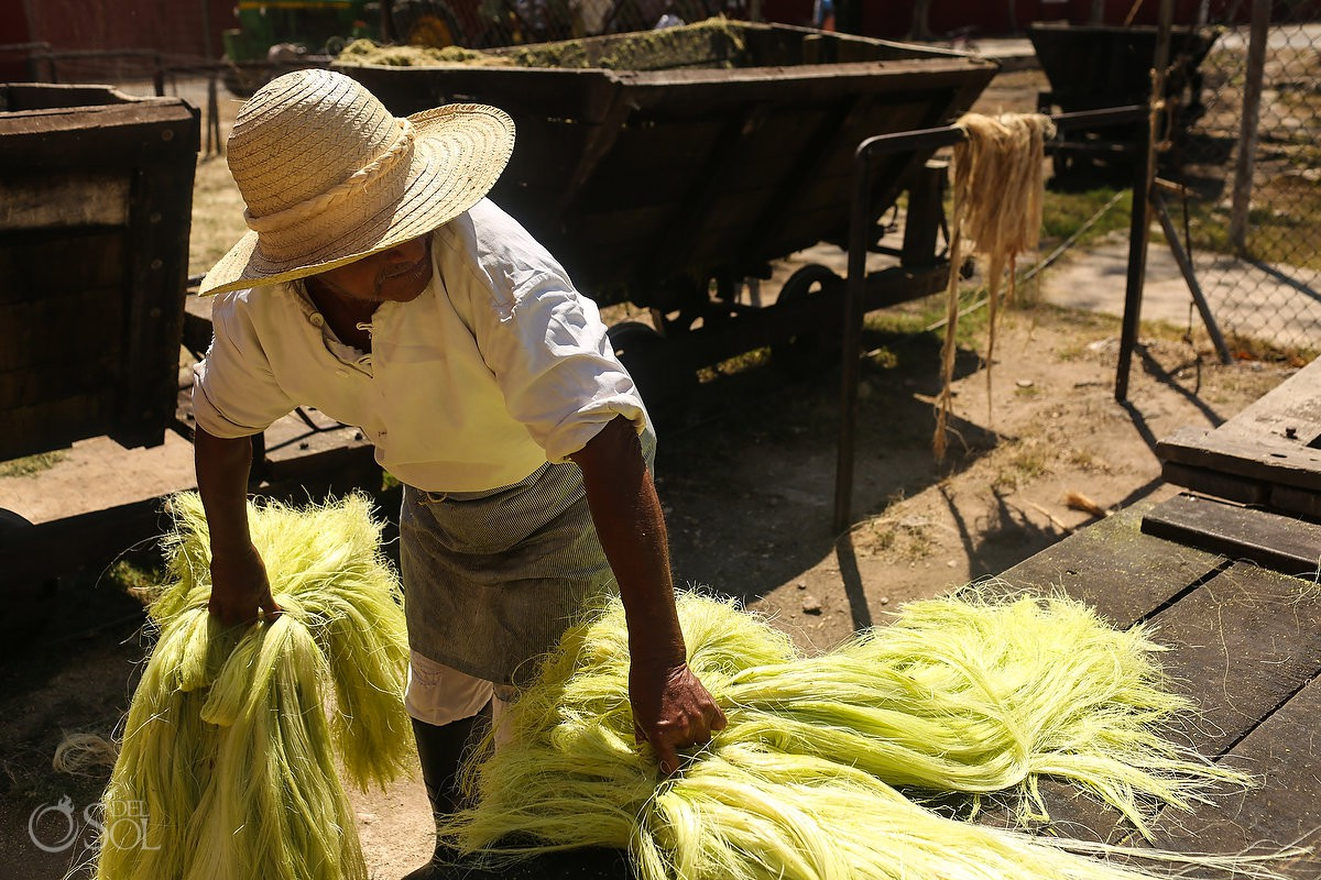 The Hacienda takes pride in showing visitors how henequén - Green Fibre - is extracted from agave leaves and made into an organic fibre used to make rope The Hacienda Sotula de Peon, Yucatan, Mexico #ExperienciasInfinitas
