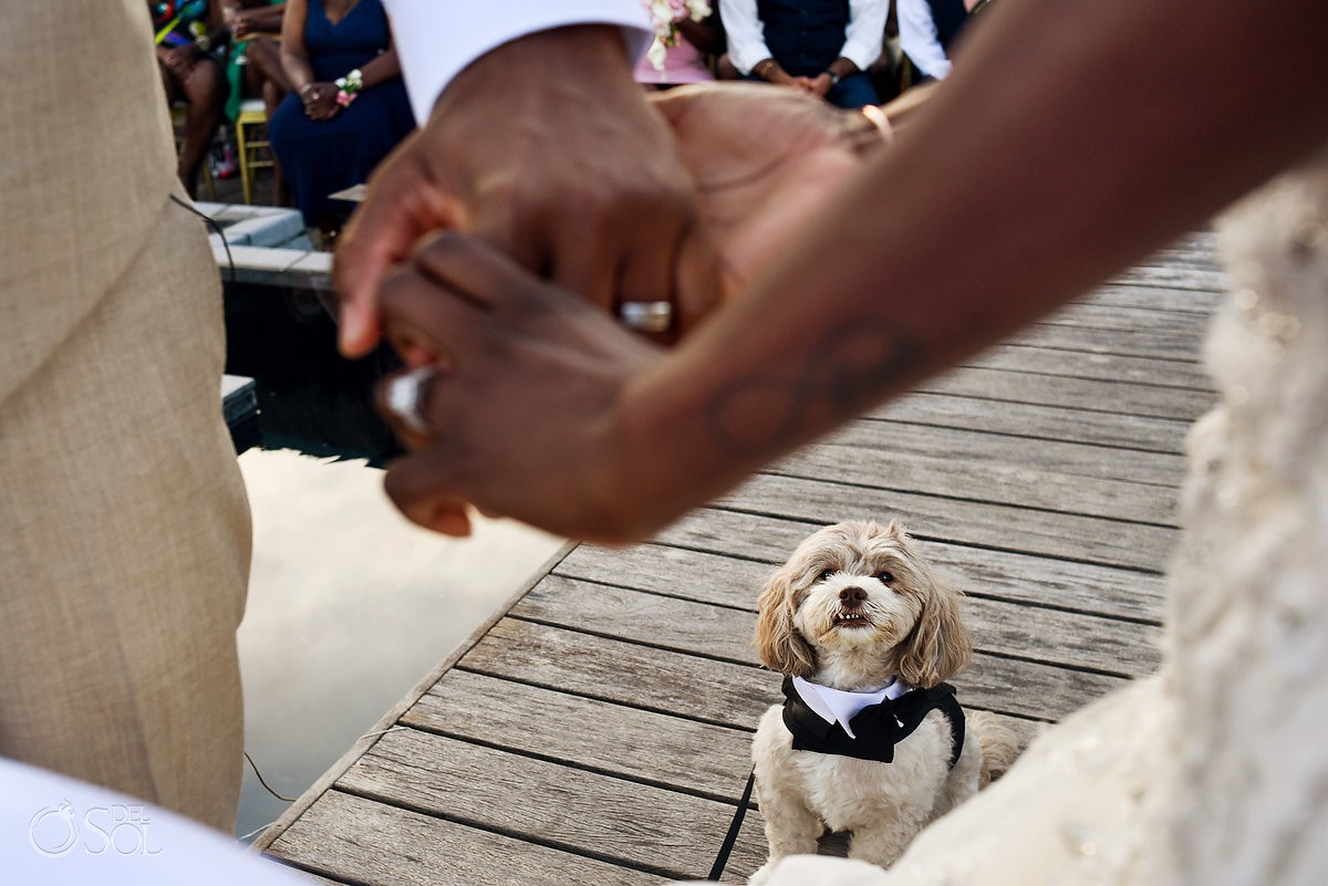 Dog Look Ceremony Nizuc Resort Cancun Mexico Destination Wedding