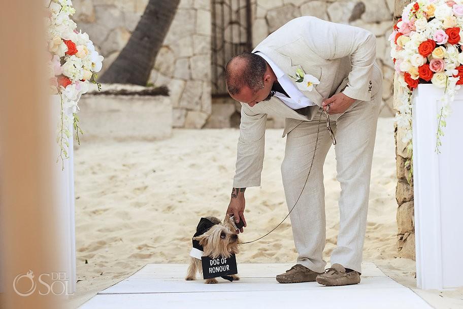 dog of honors Casa Corazon Playa del Carmen, Mexico.